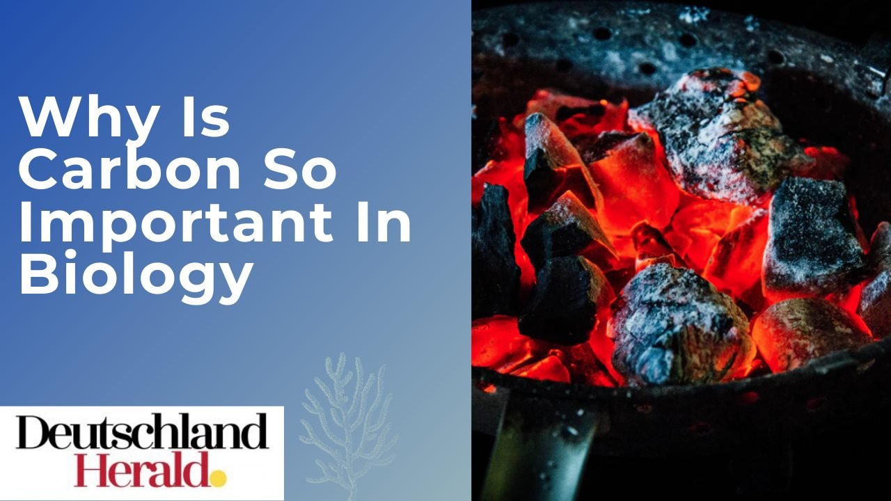 Why Is Carbon So Important In Biology? : The basic element of life